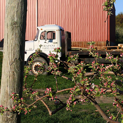 Trapani Farms LLC is a fourth generation fruit and vegetable farm in the beautiful town of Milton, N.Y., located in the heart of the Hudson Valley. The Trapani family has been farming in Milton since 1923. We offer a wide variety of both fruits and vegetables to the public through our home farm stand, as well as our many farmer's markets that we visit.